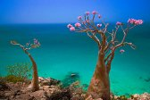 beach, coast, coastline, day, ocean, outdoor, photo landscape, photo nature, photo plants, rock, sea, Socotra islands, spring, summer, top view, tourism, Trees, water, Yemen, SONY A-900,