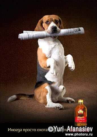 Рекламная съемка алкоголя, съемка животных. Фотографии собак Бигль. Настойка горькая. Рекламная фотография. Рекламный фотограф Юрий Афанасьев.