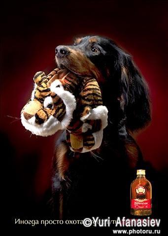 Рекламная съемка алкоголя, съемка животных, фотографии собак Сеттер. Настойка горькая. Рекламная фотография. Рекламный фотограф Юрий Афа